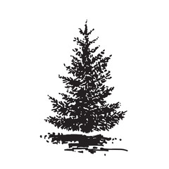 Hand-drawn tree, fir. Black and white realistic image, sketch painted with ink brush.