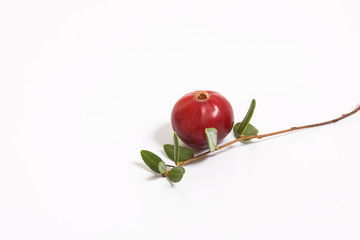 One berry cranberries and a sprig with leaves on a white background. Studio, macro.