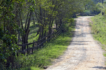 Wooden fence and trees flanking the dirt road