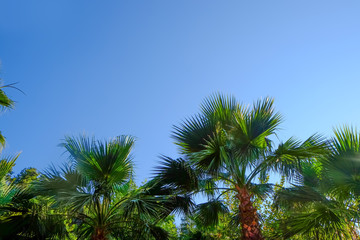 Beautiful tropical palms on blue sky background