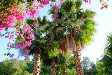 Beautiful tropical palms in garden - fototapety na wymiar