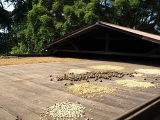 Hawaii Kona Coffee Beans Big Island-7