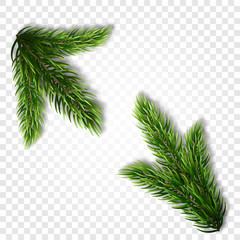 Collection of Fir Branches. Set of Realistic Detailed Christmas tree branches. Symbol of Christmas and New Year isolated on white background for your design. Vector illustration
