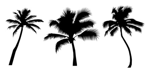 Set black silhouettes tropical palm trees, on white background. Flat design Vector Illustration