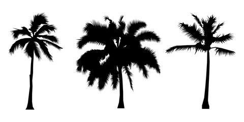 set of black silhouette coconut trees, natural sign, Flat design Vector Illustration