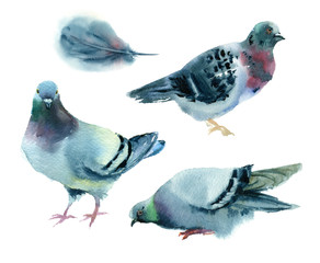 Watercolor painting. Set of pigeons on white background.