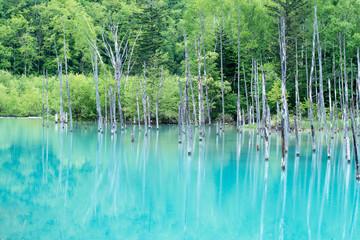 青い池 #1