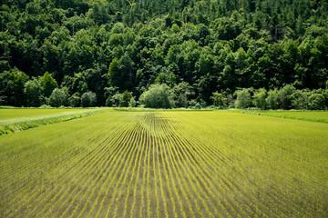 畑のある風景