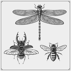 Dragonfly, bee and beetle. Vector illustration.