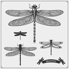 Set of dragonflies. Vector illustration.