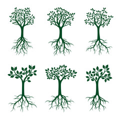Set Green Trees with Leaves and Roots. Vector Illustration.