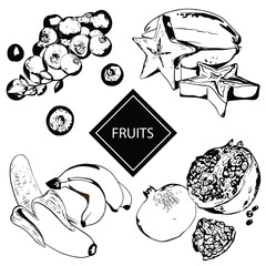 Collection of fruits and berries in hand drawn graphics. Vector illustration of a bilberry, banana, pomegranate and carambola