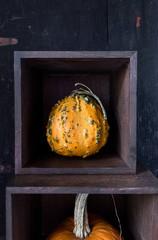 Decorative  orange gourd in square box with dark background