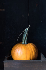 pumpkin with stem on dark background