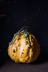 Decorative orange gourd on dark background