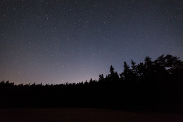 Clear starry night sky and forest silhouette