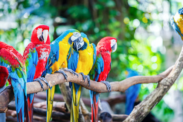 macaws stand on log