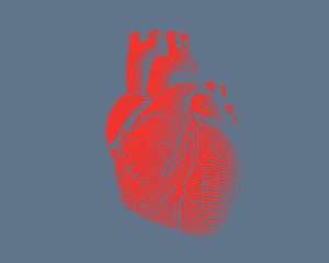 Red human heart illustration on gray BG
