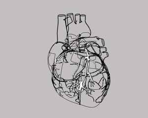 Vector human heart pen drawing stylized illustration