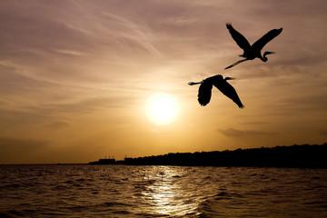 Photo sur Aluminium Dauphins Under the concept of good leadership, teamwork ,Like birds flying through the sunset