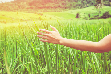 Asian women travel relax in the holiday. On a meadow nice atmosphere during the summer. Female hand grasping grass