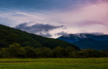 rising clouds in valley at dawn. horses grazing on the meadow near the hill. mysterious countryside scenery