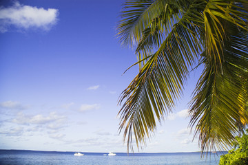 Tropical island and sand beach exotic travel.