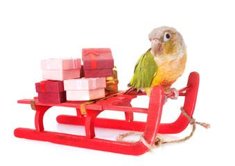 bird and christmas