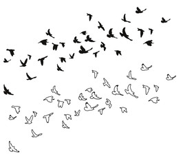 sketch of pigeons flying