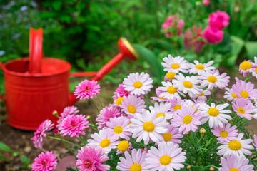 園芸 マーガレットと赤いジョウロ