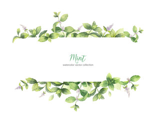 Watercolor vector banner of mint branches isolated on white background.