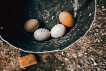 Uova in Cascina