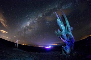 vialactea cactus