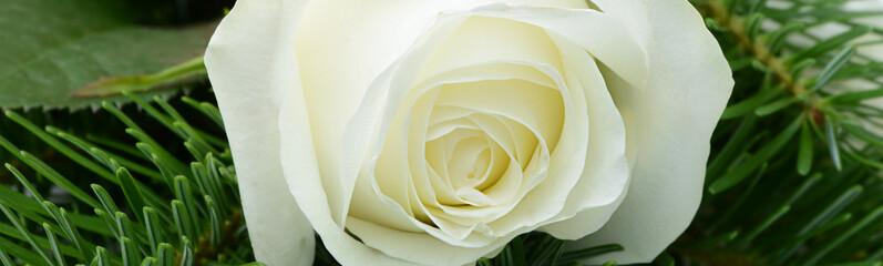 Blumen 863