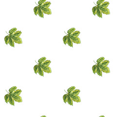 Seamless pattern with  hop leaves