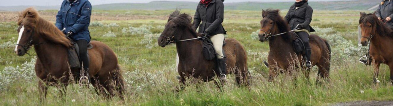 Island-Pferde beim Ausritt