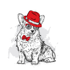 A cute puppy with a hat and glasses. Vector illustration for a postcard or a poster, print for clothes. Pedigree dog. Welsh Corgi.