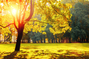 Poster Geel Autumn colorful landscape in sunny autumn landscape park lit by sunlight. Autumn park in bright sunlight