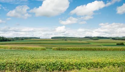 Field of Green/A field of green vegetation.