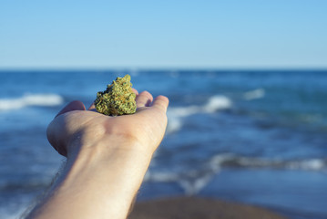Hand holding a cannabis nug against ocean waves and blue sky landscape