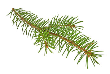 Closeup of fir tree branch isolated on a white background