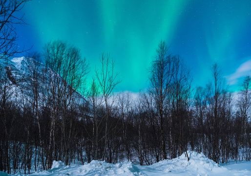 Northern Lights in a snowy wood