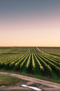 Golden German Autumn Vineyards