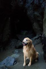 Golden retriever in a beach cave