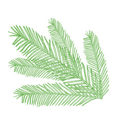 Vector conifers illustration on white. Evergreen plant sketch. Christmas decoration elements