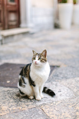 A portrait of a kitten