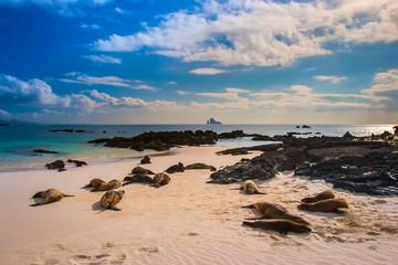 A rookery of fur seals. The Galapagos Islands. Ecuador.