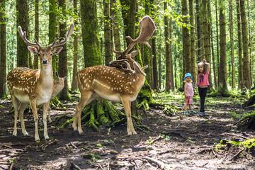 Kinder im Tierpark beobachten Wild