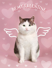 valentine post card with fat smiling cat  with angel wings and heart frame on the pink background