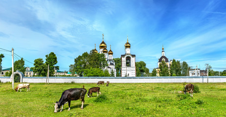 Cattle in pasture at St. Nicholas Monastery in Pereslavl-Zalessky - Yaroslavl Region, Russia